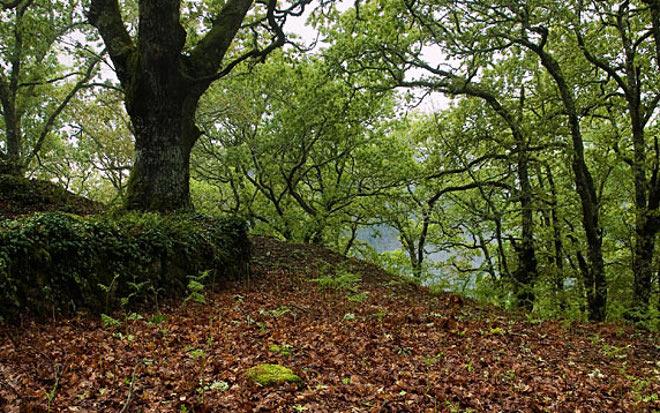 Los bosques del sur de Europa pierden más hojas
