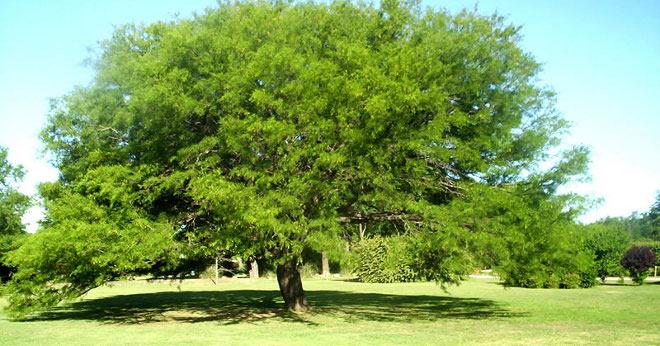 ¿Cuántos árboles hay en el mundo?