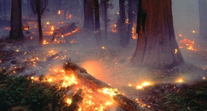 Datos sobre los incendios en España en verano de 2011 Datos sobre los incendios en España en verano de 2011