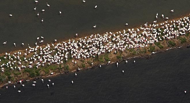 Detalle de la fauna del Delta