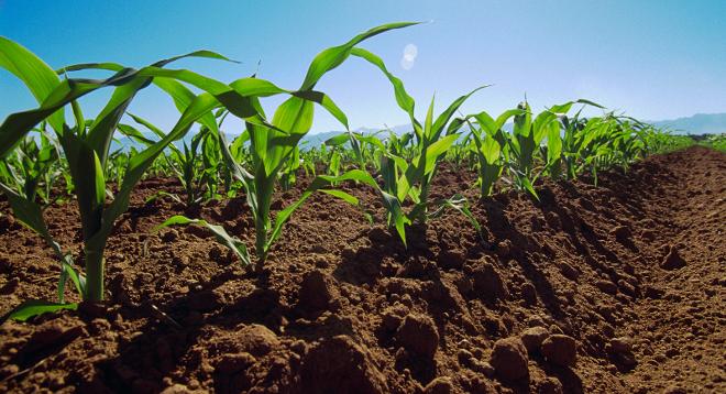Resultado de imagen para suelo agricola