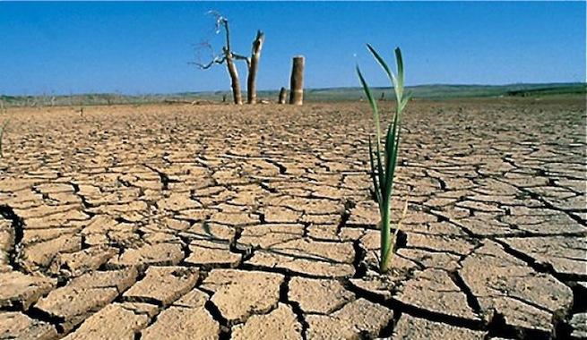 Los virus hacen las plantas m s resistentes - Plantas resistentes al frio ...