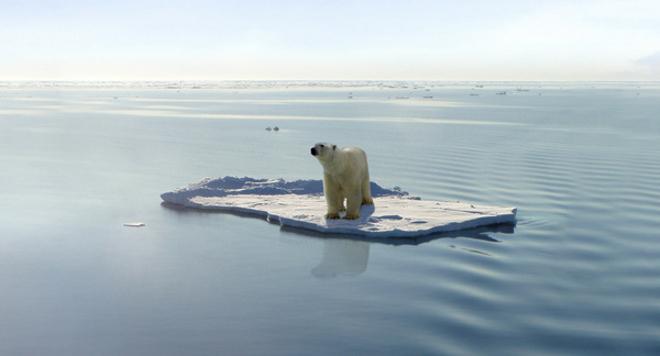 Cambio climático y extinción de los animales