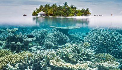 Corales Maldivas