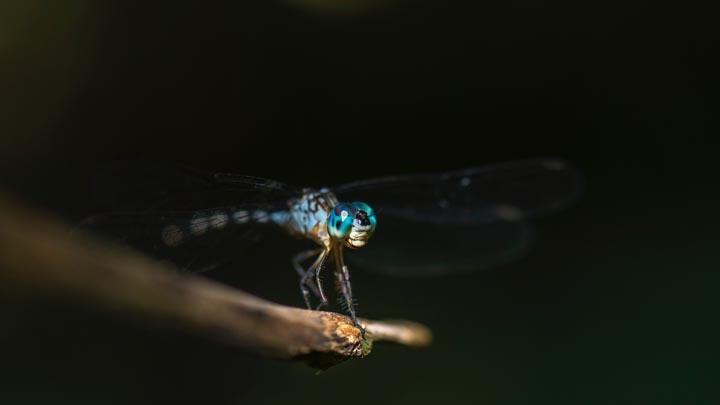 mosquitos-virus