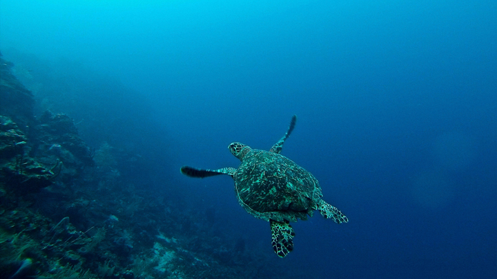 oxigeno-oceanos