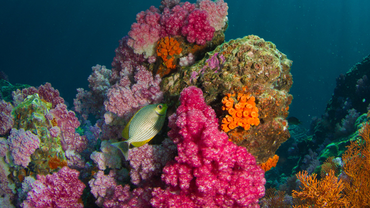 coral-cambio-climatico