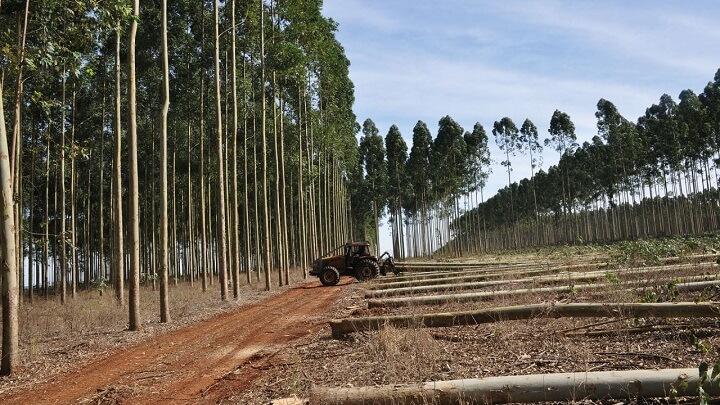 madera-reforestada-eucalipto