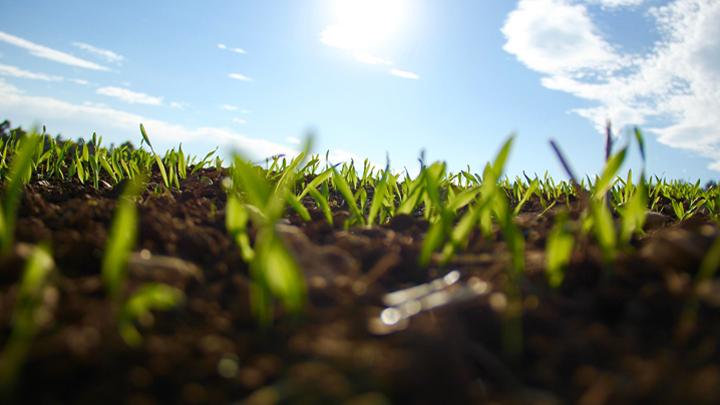 cultivos-bioenergeticos