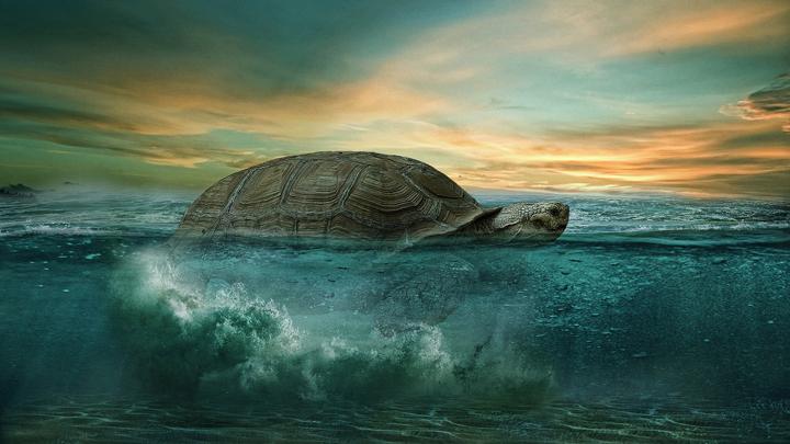 tortuga-verde