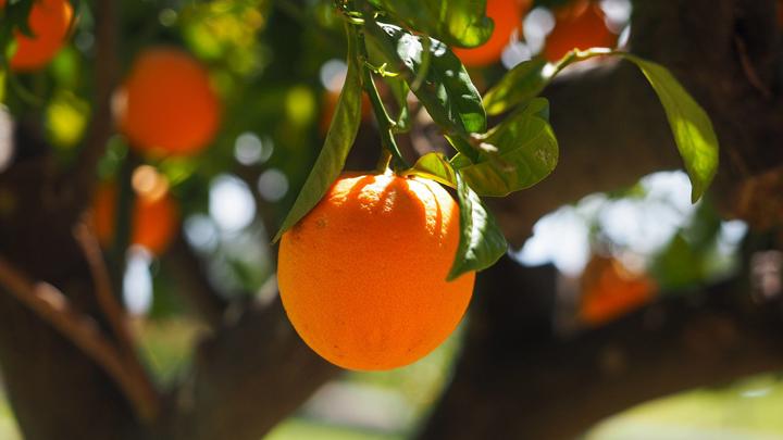 cultivos-cambio-climatico