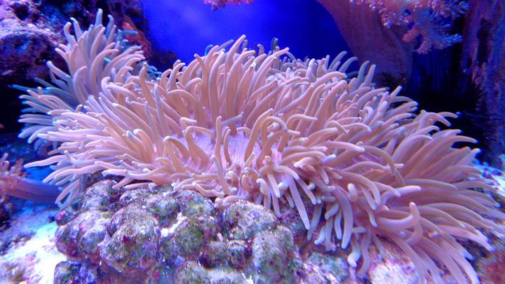 El calentamiento global frena la recuperación del coral