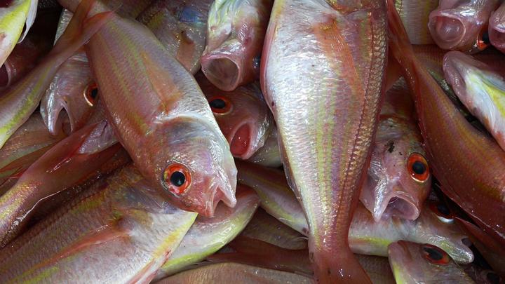 pescado-cambio-climatico