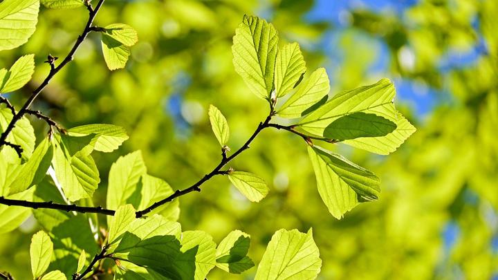 hojas-artificiales