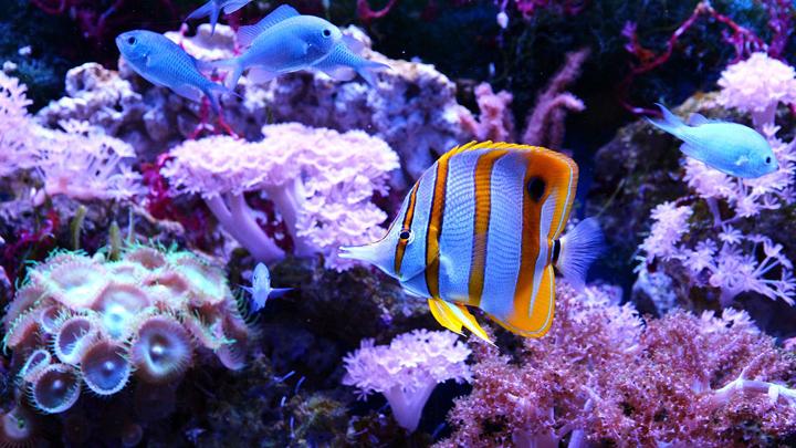 especies-marinas