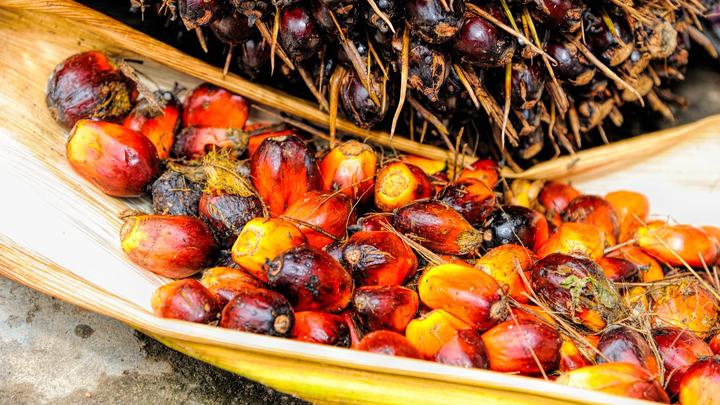 diesel-aceite-palma