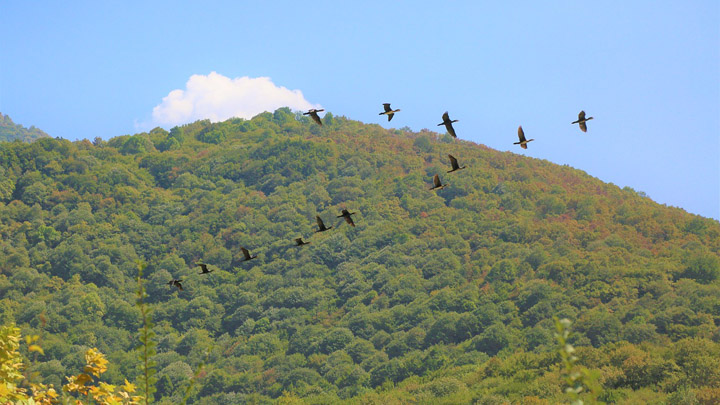 aves-montana